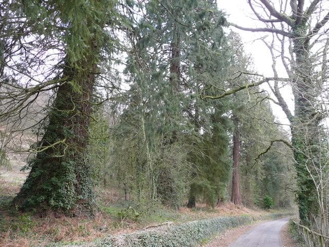Magnificent redwoods