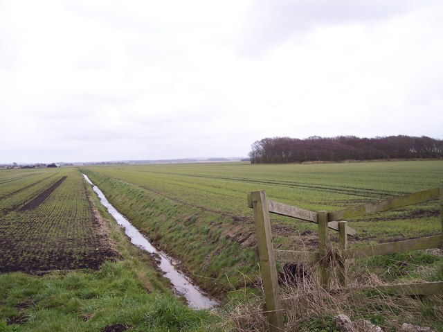 Ditch and Kings Covert