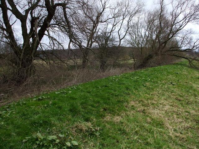Floodbank & Weeping Willows