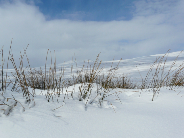 Easter snow, Crask