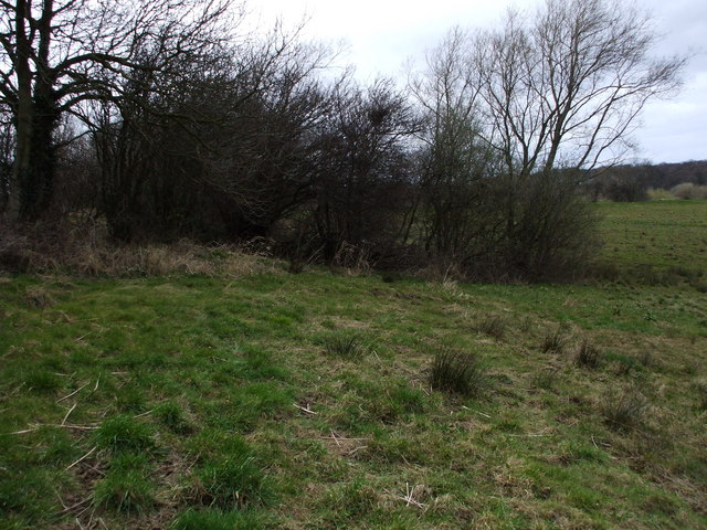 Copse at Ryther Ings
