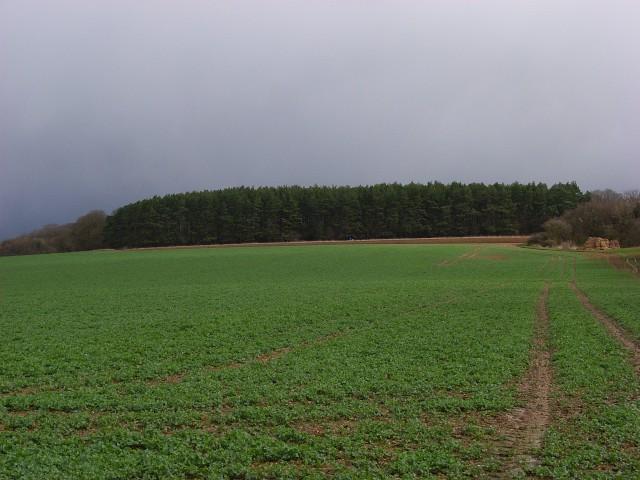 Farmland and plantation, Little Bedwyn