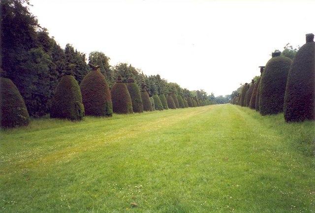 Clipsham topiary avenue
