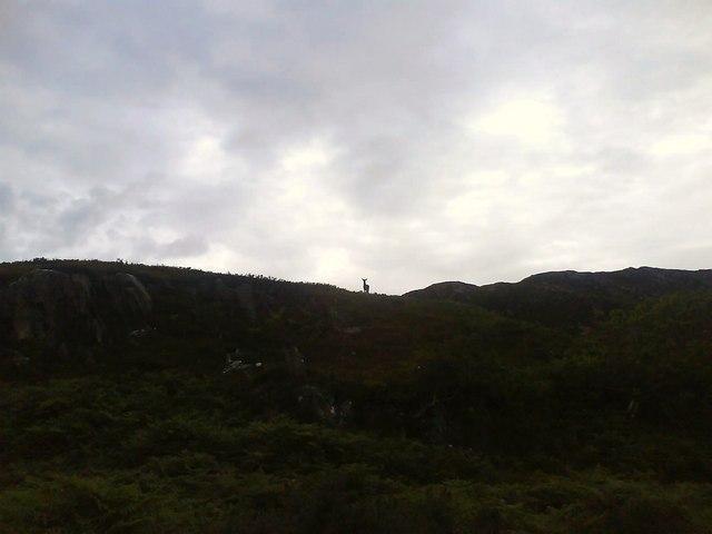 Deer, near Rhue