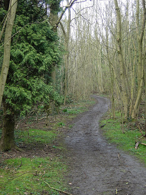 Woodland footpath on Cottagers Hill