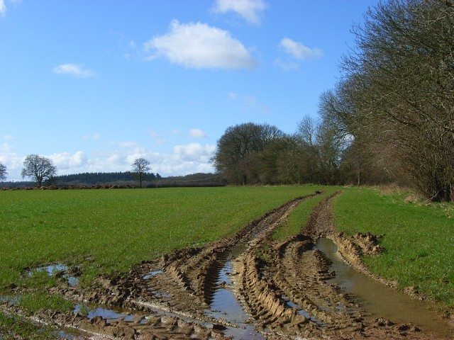 Farm track, Chisbury