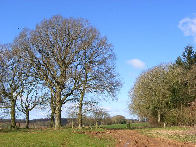 Trees in farmland, Chisbury