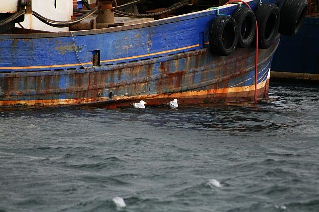 Gulls in Carradale Harbour