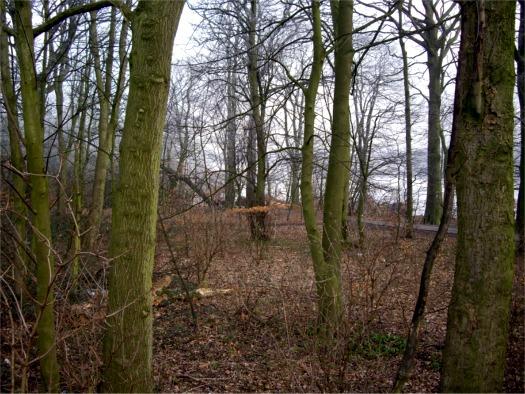 Woodland along Carr Mill Dam
