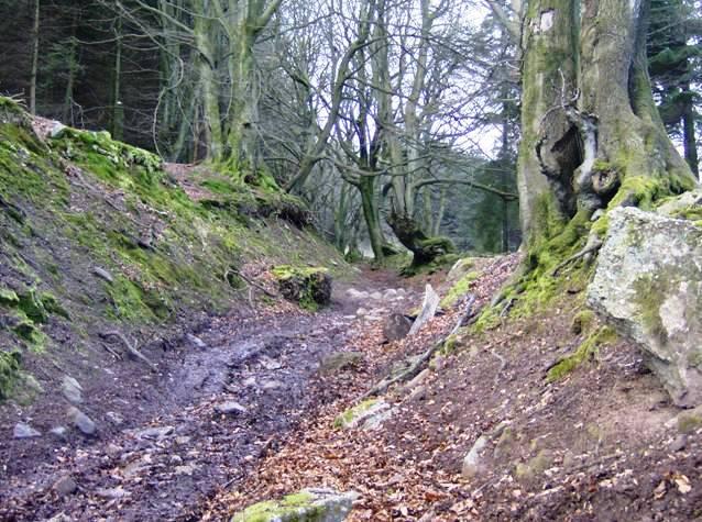 Sunken lane to Mynydd Garnclochdy