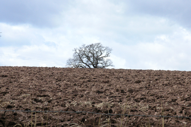 Ploughed field and half hidden tree