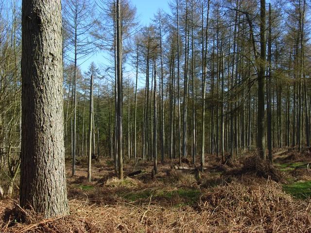 Chisbury Wood