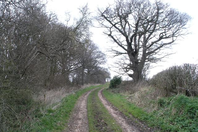 Path and Oak tree