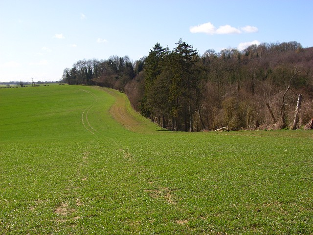 The edge of Chisbury Wood