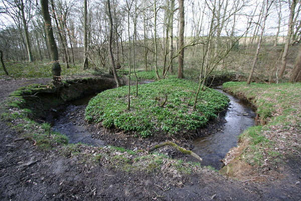Stream in Stony Cliffe Wood