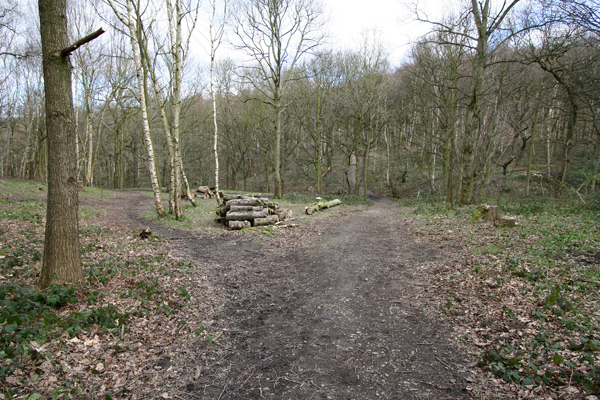 Tracks in Stony Cliffe Wood