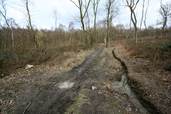 Track in Stony Cliffe Wood