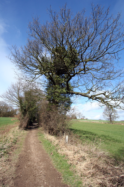 Track towards Middlestown
