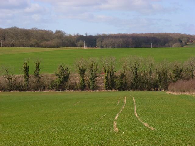 Farmland, Great Bedwyn