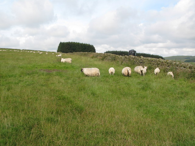 Pastures near Grindon Hill