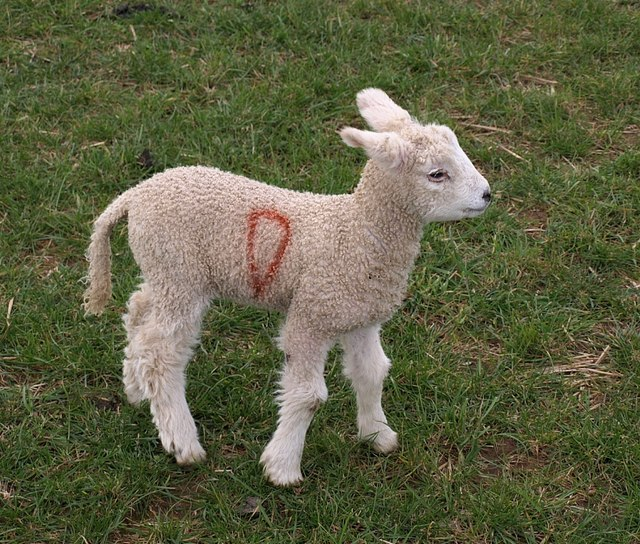 Lamb, Tregatherall