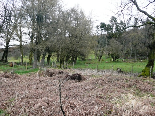Rough woodland