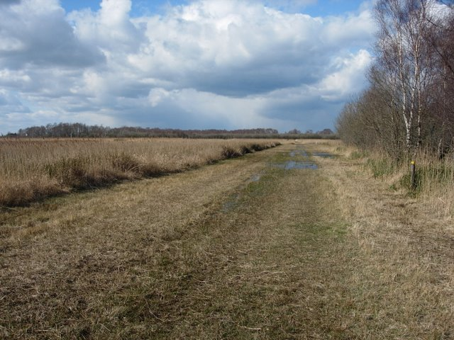 Track through Wicken Fen