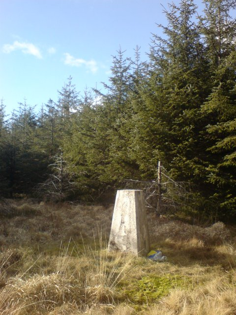 Trig point in the middle of a forest