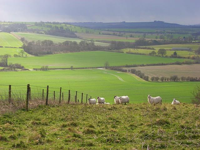 Downland view, Marten
