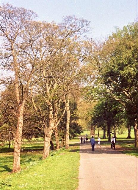 Springtime  walkers in Bute Park