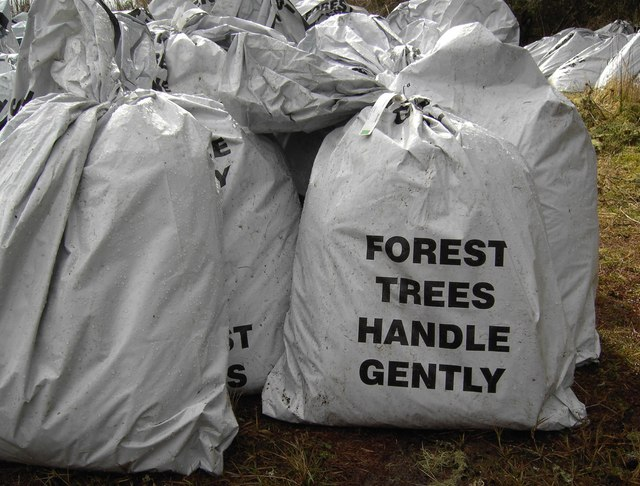 Forest Trees Handle Gently