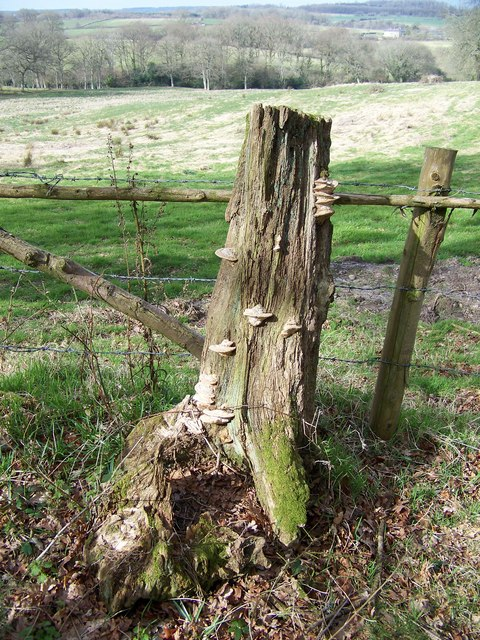 Tree stump and fungus, Cannon Hill Wood