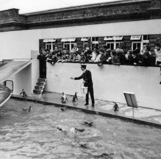 Penguin enclosure, London Zoo, Camden, taken 1967