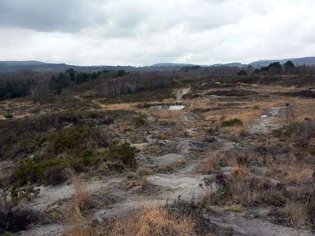 Bovey Heathfield - lowland heath