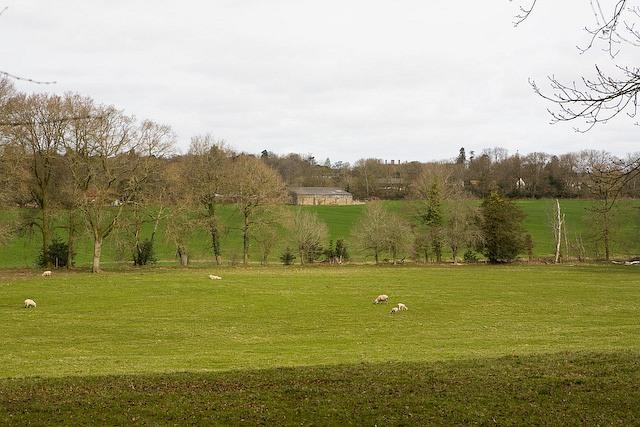 View from Bracken Farm across fields towards Melchetcourt Farm