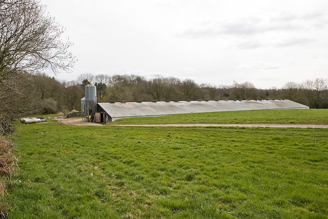 Chicken shed at Nursery Farm, Landford
