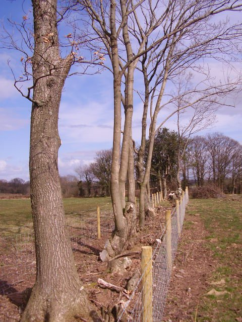 Hedge improvement