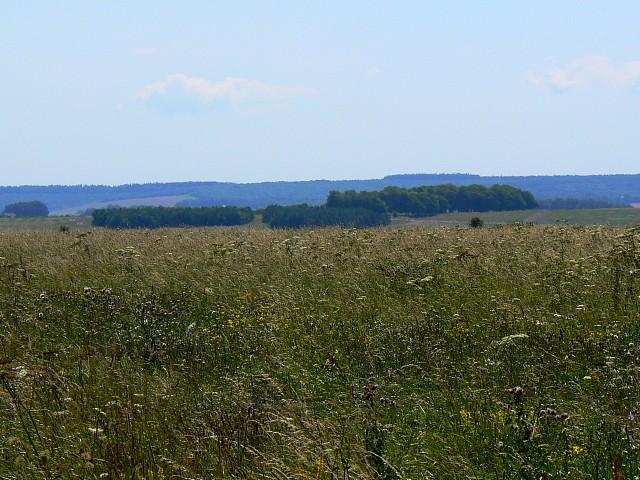 A view south, near Tenantry Down, Salisbury Plain