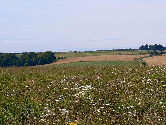 A view west, near Tenantry Down, Salisbury Plain