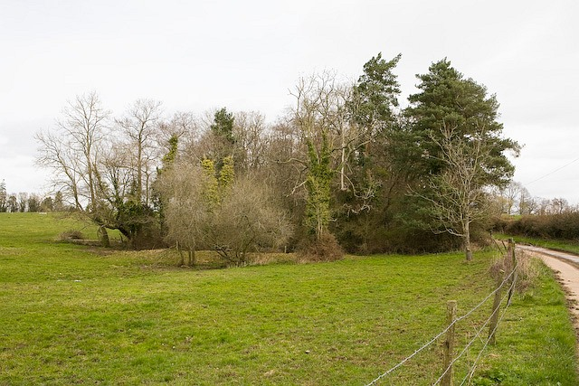 Pond at Melchetcourt Farm