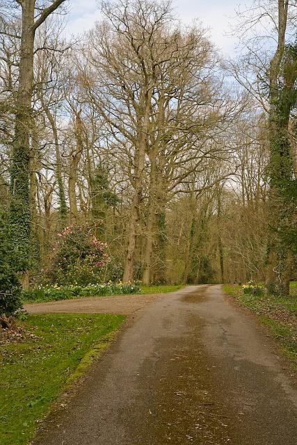 Access road at Woodfalls