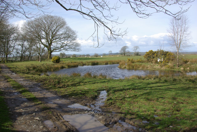 Pond north of Dihewyd