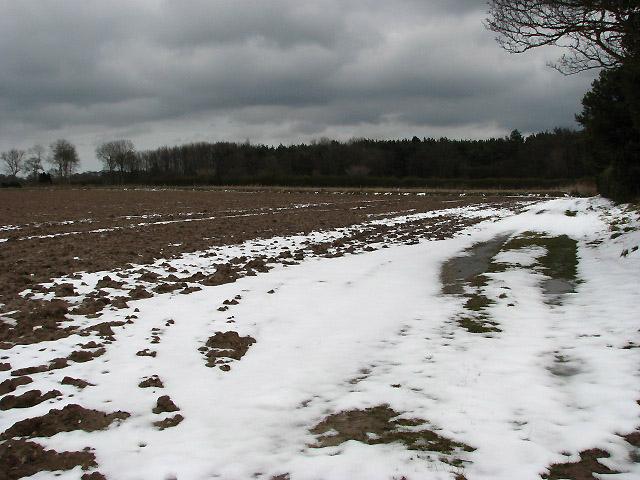 Field beside School Road
