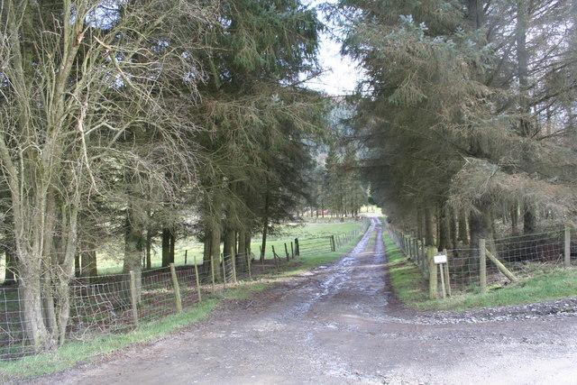 Bunny Lane