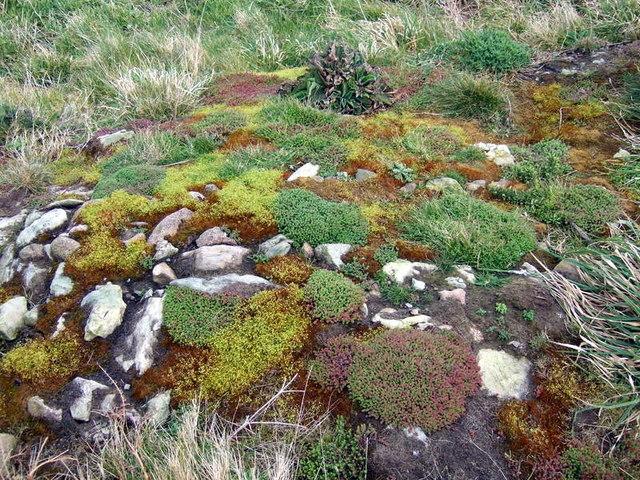 Clegyr Boia, natural rock garden