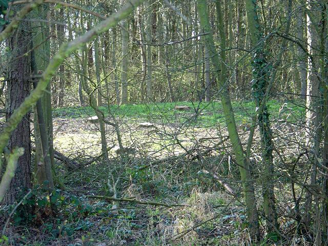 The Cuckoo Bush (1)