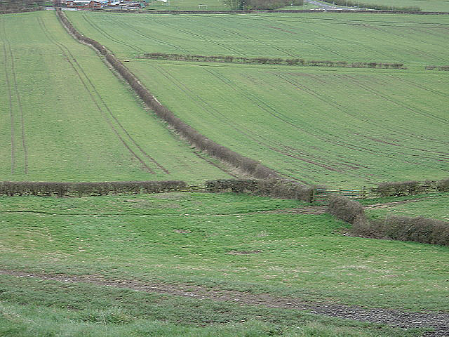 Hedgerow patterns near Gotham