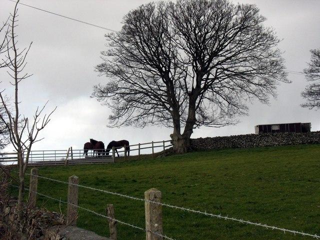 Horses on the skyline
