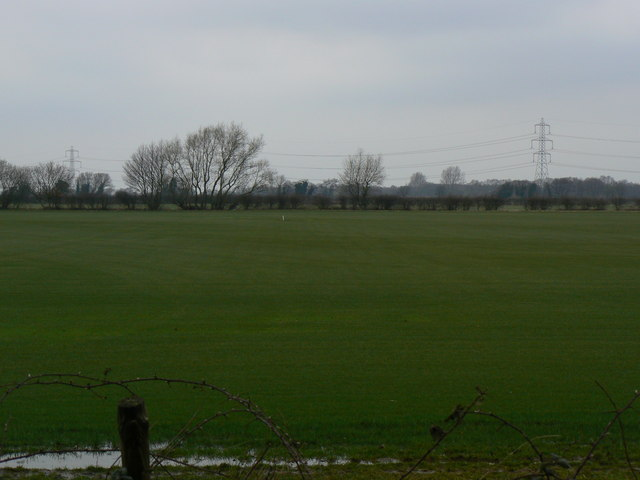 View North of the woods on Allerthorpe Common