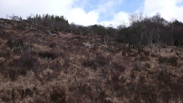 Native woodland and scrub